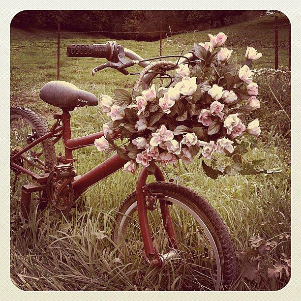 Vélo sur herbe ... Ittre